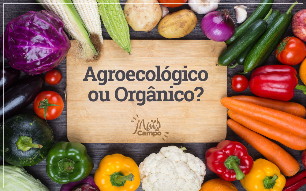 As diferenças entre orgânicos, agroecológicos e em transição
